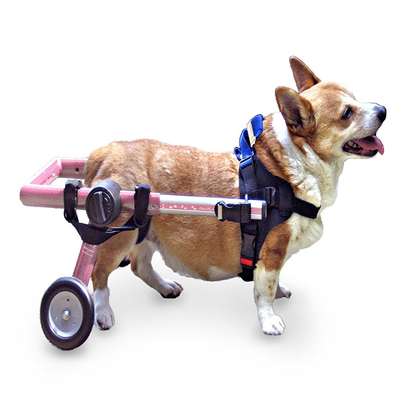 Wheelchairs For Dogs Uk DogsWheels » Wheelchairs for dogs